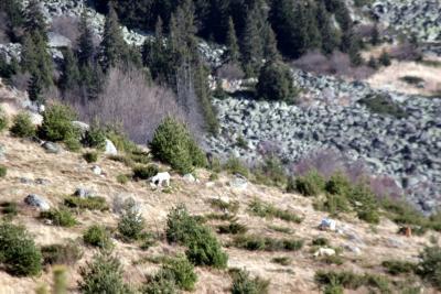 Насладете се на природата в околностите на хижа Селимица